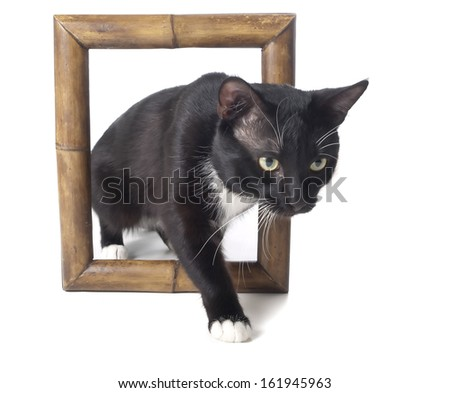 cat in frame  on a white background in studio - stock photo