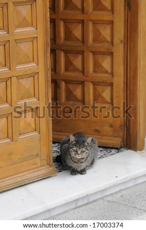 Cat in front of a door - stock photo