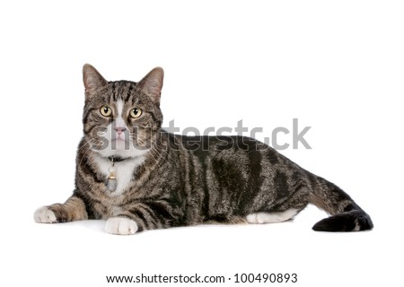 cat in front of a white background - stock photo