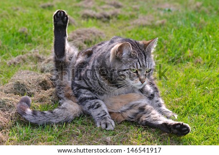 Cat in funny position - stock photo