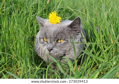 cat in grass with yellow flower on the head - stock photo