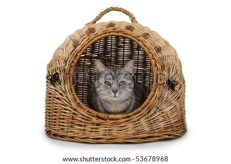 Cat in handbasket on white background. - stock photo