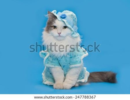 cat in knitted clothes on a blue background isolated - stock photo
