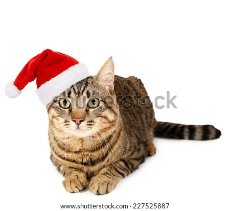 Cat in Santa Claus hat isolated on white - stock photo