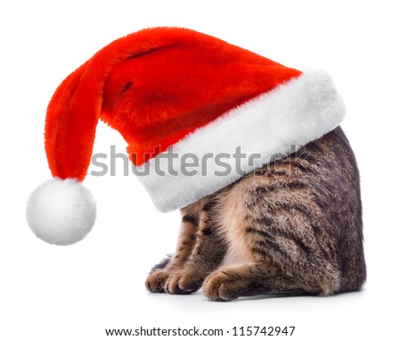 Cat in Santa Claus red hat isolated on white background - stock photo