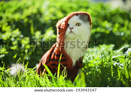 cat in spring grass - stock photo