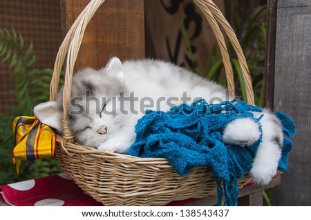 Cat in the Basket - stock photo