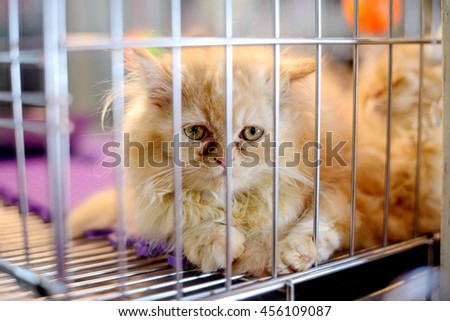 Cat in The Cage - stock photo