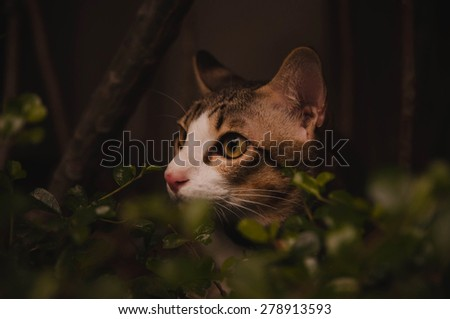 Cat in the Dark, Hunting in the Garden. Concept and Idea of Cat Instinct, Wild.  Selective Focus Shot. - stock photo