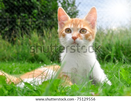 cat in the grass - stock photo