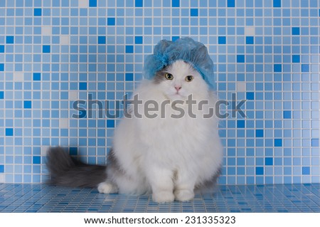 cat in the hat for the hair in the shower - stock photo