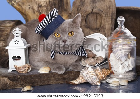 cat in the hat sailor - stock photo