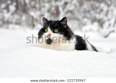 Cat   in the snow - stock photo