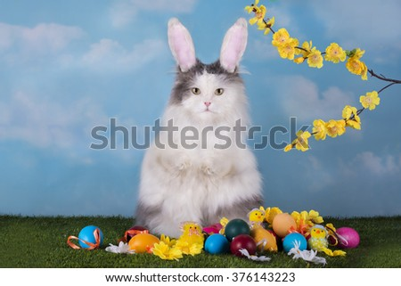 cat in the suit bunny celebrates Easter - stock photo