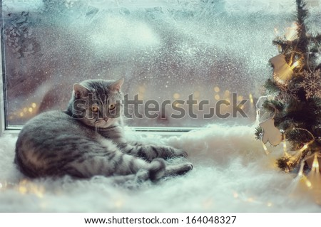 Cat in the winter window - stock photo