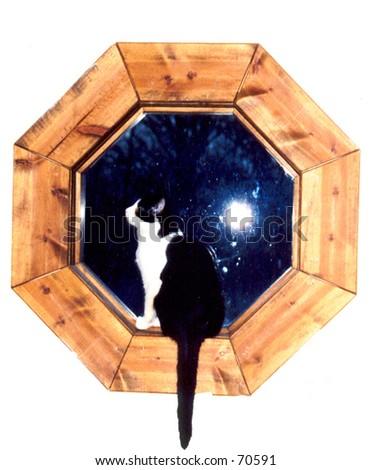 Cat in Window - stock photo