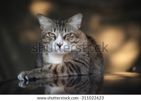 cat injury in the eye after fighting with an another cat - stock photo