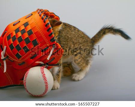 Cat inside a baseball glove over white background  - stock photo