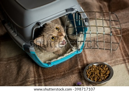 Cat inside pet carrier. Food for cats. - stock photo