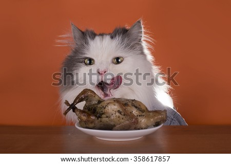 Cat is going for dinner chicken - stock photo