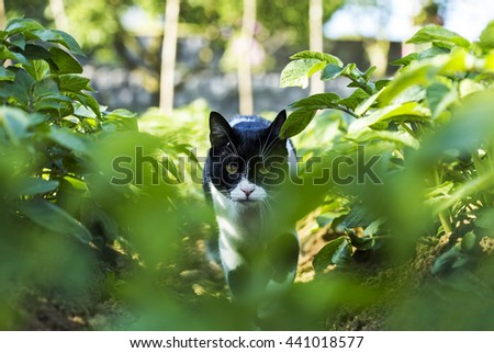 Cat is moving stealthy to catch a mouse. - stock photo