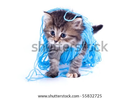 Cat is playing with a cord - stock photo
