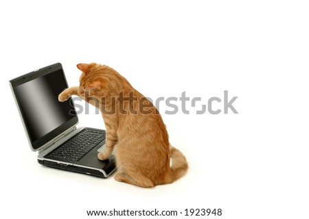 Cat is siting in front of a laptop - stock photo