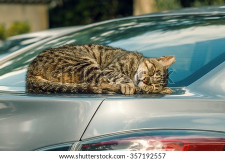 cat is sleeping in a car - stock photo