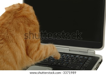 Cat is using a laptop - stock photo