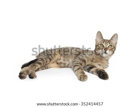 cat isolated laying down, Cat laying down - stock photo