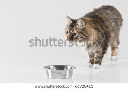 cat isolated on white background - stock photo