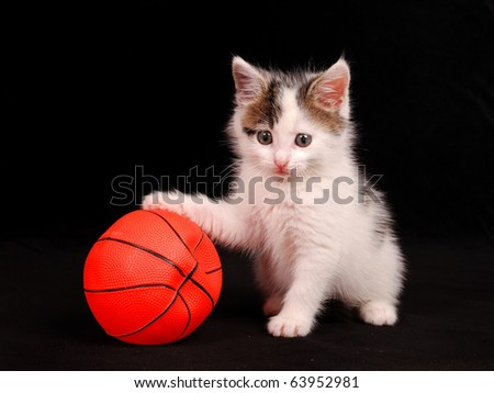 cat keeps a basketball ball - stock photo