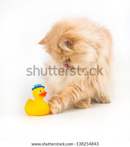 Cat kitty is lurking artificial duck colorful toy for pets - stock photo