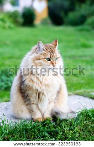 Cat. Lady-cat - stock photo