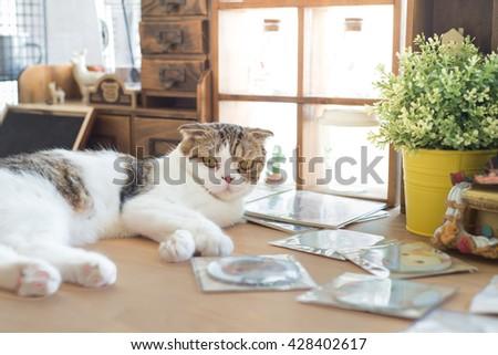 Cat lay down on wood floor - stock photo