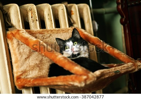 Cat laying - stock photo