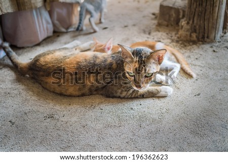 Cat laying down for breastfeeding its baby - stock photo