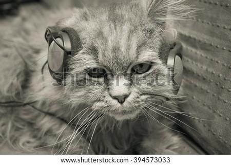 Cat listening to music - stock photo