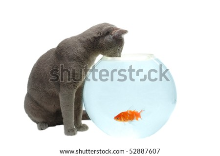 cat looking at fish in the aquarium - stock photo