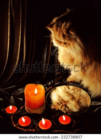 Cat looking at his reflection in the mirror and practice divination. Merry Christmas - stock photo
