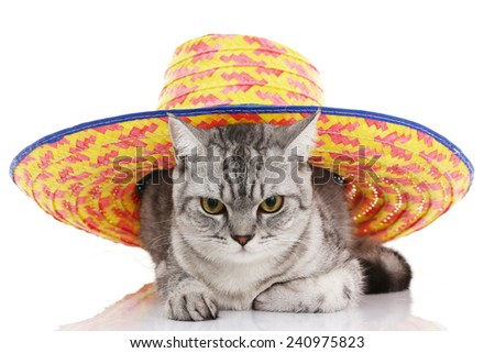 Cat looking camera with colorful hat on head - stock photo