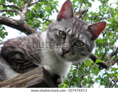Cat looking down - stock photo