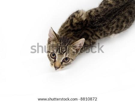 Cat looking from below - stock photo
