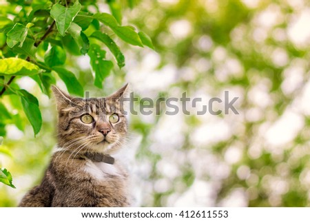 Cat looking into the distance with green leaves in background. Plenty of copy space - stock photo