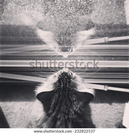 Cat looking out a window, instagram style - stock photo