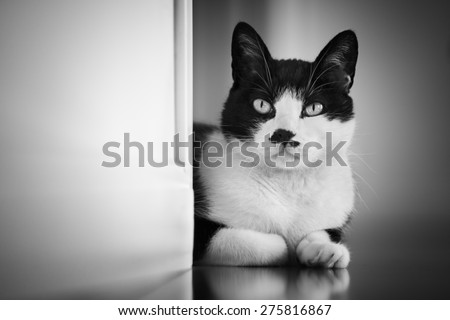 Cat looking out from behind a wall - black White version - focus on the eye. The left wall is easily used ad a copyspace  - stock photo