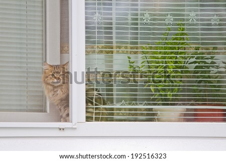 Cat looking out the window of the house - stock photo