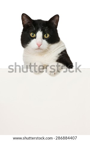 Cat looking over a wall - stock photo