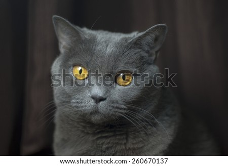 Cat looking to camera - stock photo