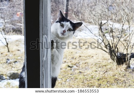 cat looks outside the window and asks home - stock photo